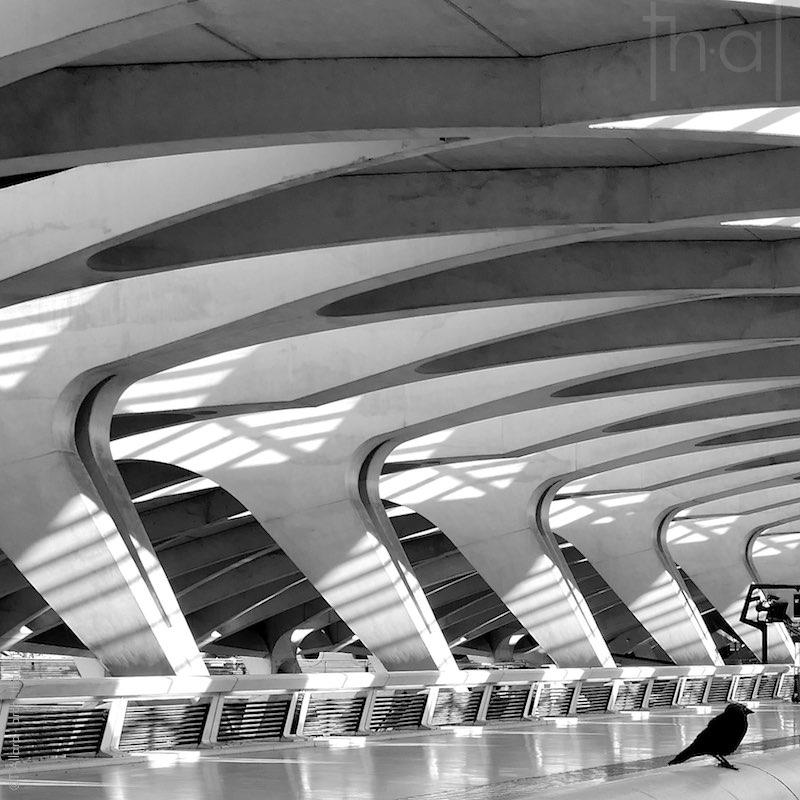 Gare de Lyon-Saint-Exupéry, un nid d'oiseau